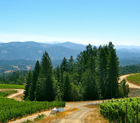 Alder Springs Vineyard