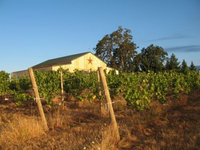 J. Wrigley Vineyard