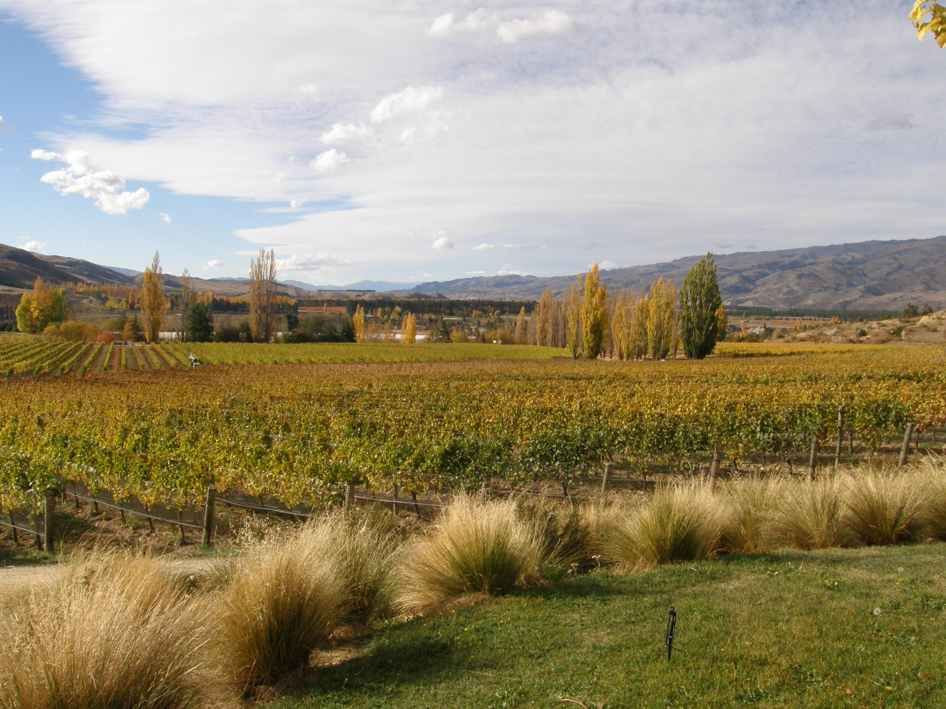 Felton Road Wines